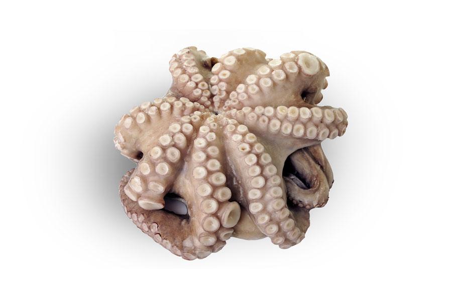 Venta de pulpo online burruezo congelados for Cocer pulpo congelado